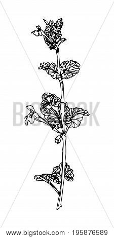 Wild flower. Sketch style. Hand drawn weed. Vector image.