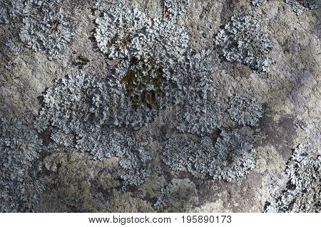 Lichen on big stone, outdoor nature background