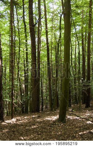 Path in quiet forest with lot of trees