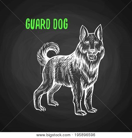 Guard dog in the style of chalk on a blackboard. Vector illustration of guard dog