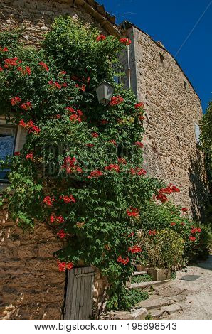 Close-up of typical stone house with sunny blue sky and flowers, in an alley of the historical village of Ménerbes. In the Vaucluse department, Provence-Alpes-Côte d'Azur region, southeastern France