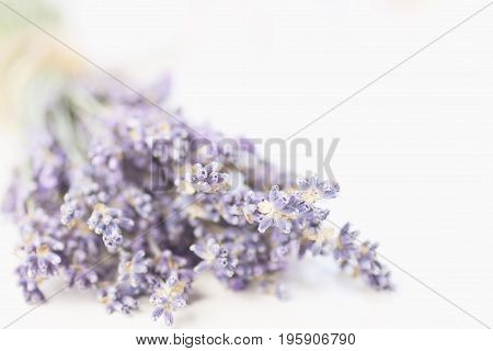 Lavender branch close-up. Selective focus. Blur. Aromatherapy light blue and violet tones.
