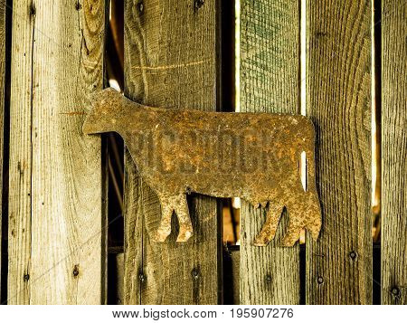 rusty tin cow nailed to weathered, vertical wooden slats as a decoration