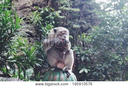 An independent and free monkey enjoying of nature's delights!