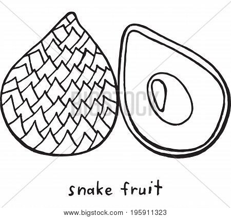 Snake fruit coloring page. Graphic vector black and white art for coloring books for adults. Tropical and exotic fruit line illustration.