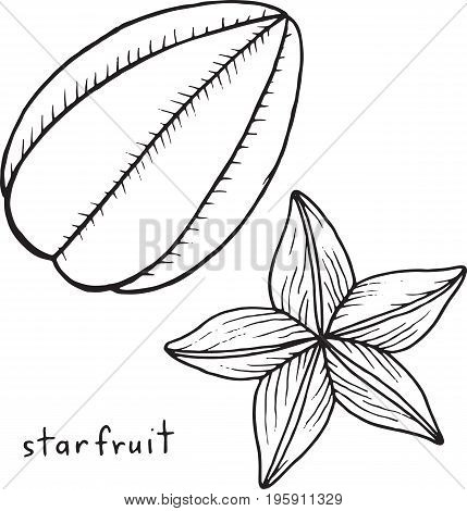 Starfruit coloring page. Graphic vector black and white art for coloring books for adults. Tropical and exotic fruit line illustration.