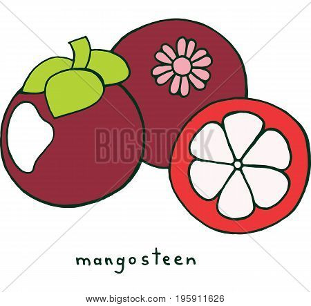 Mangosteen fruit coloring page. Graphic vector colorful doodle art for coloring book for adults. Tropical and exotic fruit line illustration.