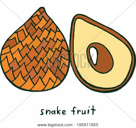 Snake fruit coloring page. Graphic vector colorful doodle art for coloring book for adults. Tropical and exotic fruit line illustration.