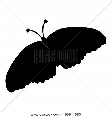 Black silhouette of a moth on a white background. vector illustration. Drawing by hand