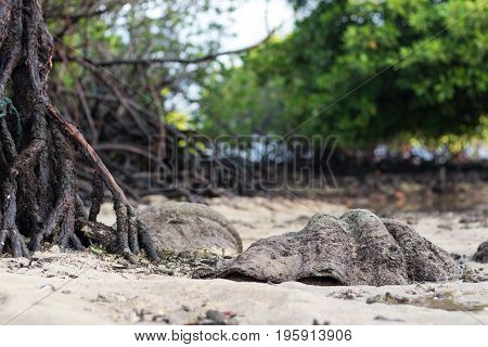 Giant ocean shell outside on the tropical island Nusa Lembongan, Indonesia, Asia, .
