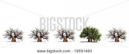 High resolution 3D conceptual baobab trees row with one green tree standing out of the crowd, isolated on white