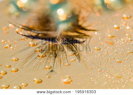 Abstract background blur. Waterdrops on peacock feather and the seed of a dandelion on a background of gold metallic foil. Macro. Selective focus.