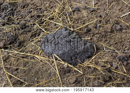 Pile of buffalo dung on the ground