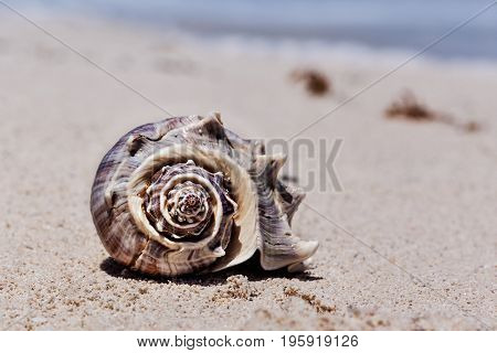 Tropical shell on the sandy beach in Cancun Mexico vacation concept