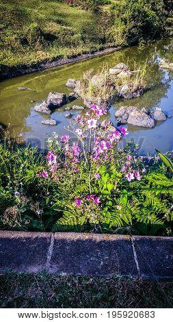 Flor silvestre creciendo a orillas del lago