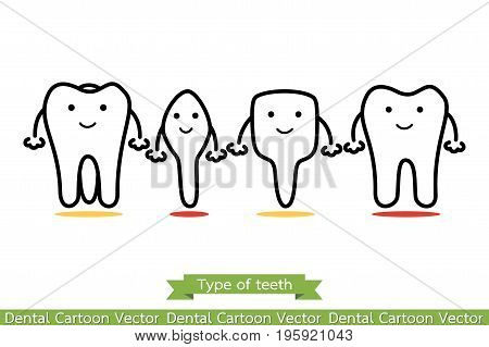 Tooth Type - Incisor, Canine, Premolar, Molar - Cartoon Vector Outline Style
