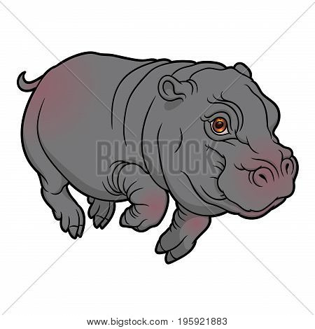 vector illustration of cute naturalistic little Hippopotamus