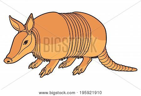 Vector illustration of a cute cartoon armadillo