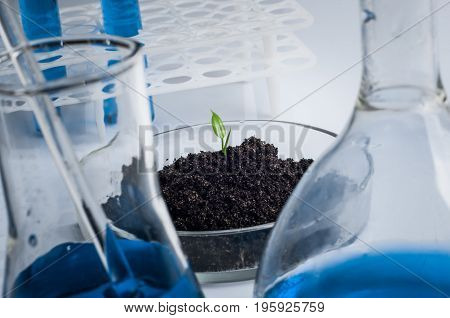 science biology ecology research and people concept - close up of scientist hands holding petri dish with plant and soil sample in bio laboratory