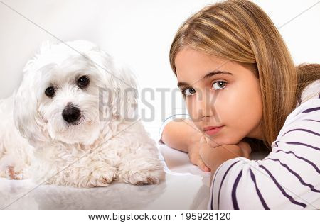 Portrait of beautiful girl and maltese dog.Studio shot