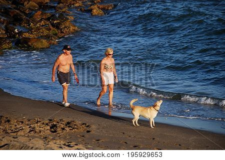 MIJAS COSTA, SPAIN - SEPTEMBER 12, 2008 - Senior couple walking along the beach with their dog Mijas Costa Malaga Province Andalusia Spain Western Europe, September 12, 2008.