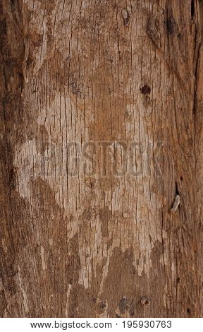 Old and grungy timber wood texture background