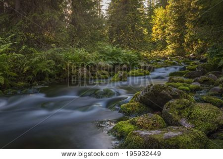 A stream in the Swedish national park Fulufjället.
