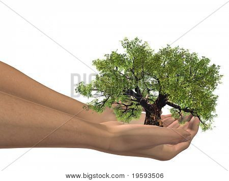 High resolution conceptual green tree hald in hands isolated on white