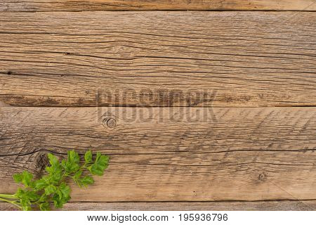 Sprig of parsley on an old wooden table. Top view.