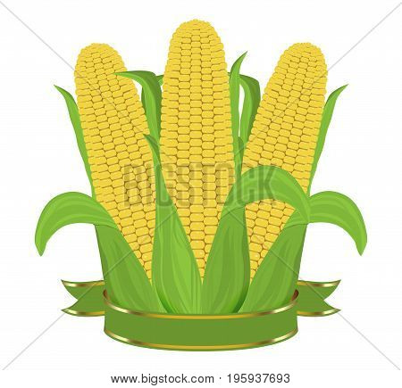 Three ripe corn with leaves and ribbon isolated on white background. Vector illustration.