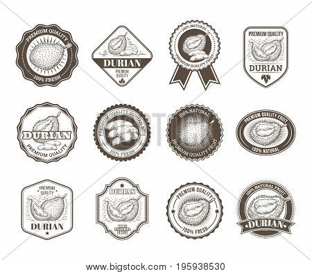 Set of black and white vector badges, stickers, high quality signs, real fresh natural product with durian fruit, in an engraving style isolated on white.