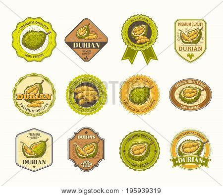Set of color vintage vector badges, stickers, high quality signs, real fresh natural product with durian fruit, in an engraving style isolated on white.