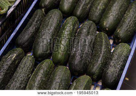 Green Fresh Cucumbers In A Market