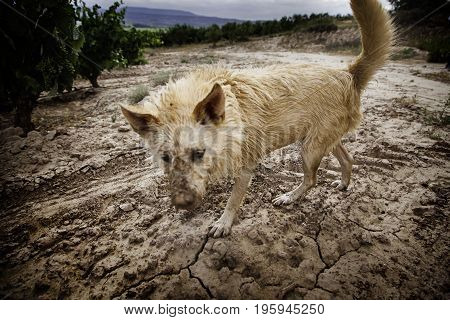 Wet Dog In The Field