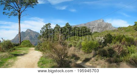 TABLE MOUNTAIN NATIONAL PARK, CAPE TOWN, SOUTH AFRICA, WITH A PATHWAY IN THE FORE GROUND AND TABLE MOUNTAIN IN THE BACK GROUND 10xf