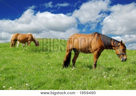 Horses In A Green Field