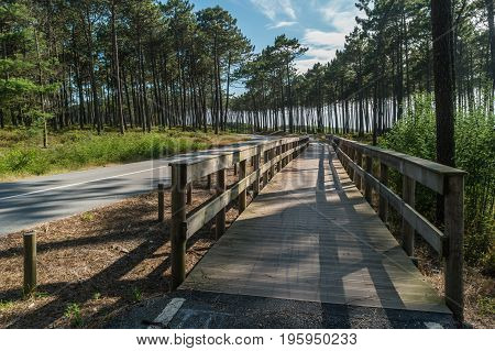 Cycling or walking trail in the green forest. Wooden walkway between Ovar and Esmoriz Portugal. Atlantico Eco Trail