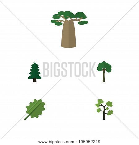 Flat Icon Nature Set Of Baobab, Garden, Park And Other Vector Objects