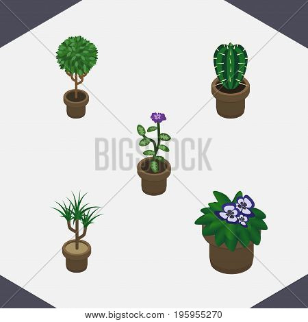 Isometric Houseplant Set Of Flowerpot, Flower, Tree And Other Vector Objects