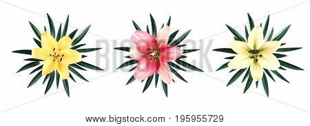 Set of two beautiful big pink and white lilies with leaves isolated on a white background. Flat lay style.