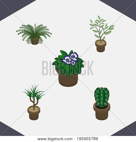 Isometric Houseplant Set Of Flowerpot, Houseplant, Fern And Other Vector Objects