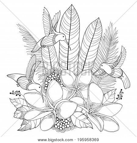 Vector flying Hummingbird or Colibri, Plumeria flowers and palm leaf in contour style isolated on white background. Outline tropical bird and ornate exotic flower for summer design and coloring book.