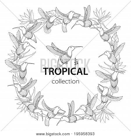 Vector round composition with flying Hummingbird or Colibri and Strelitzia reginae in contour style isolated on white. Outline tropical bird and exotic flower for summer design and coloring page.