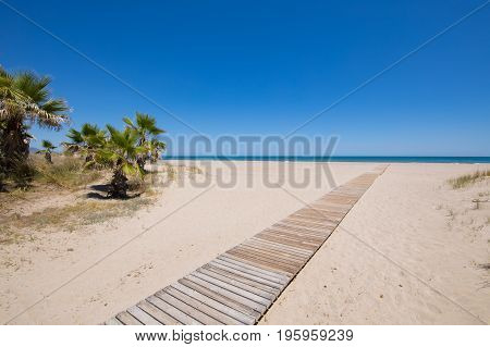 landscape access to idyllic Beach of PIne or Pinar with wooden footway on sand and palm trees in Grao of Castellon Valencia Spain Europe. Blue clear sky and Mediterranean Sea