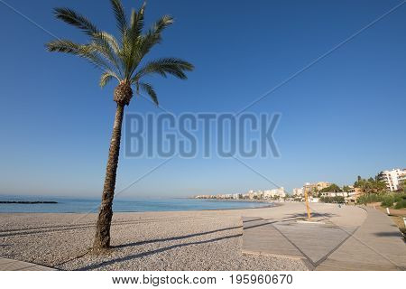 Palm Tree And Wooden Boardwalk In Beach Of Benicassim
