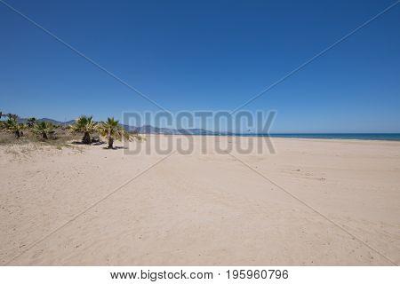 Pine Beach In Grao Of Castellon