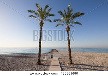 Two Palm Trees In Beach Framing Ocean