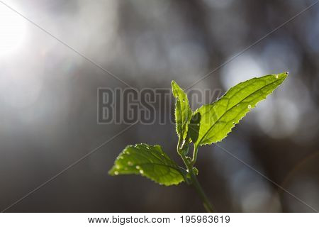 Green sprout points toward sunling on blurred background with copy space