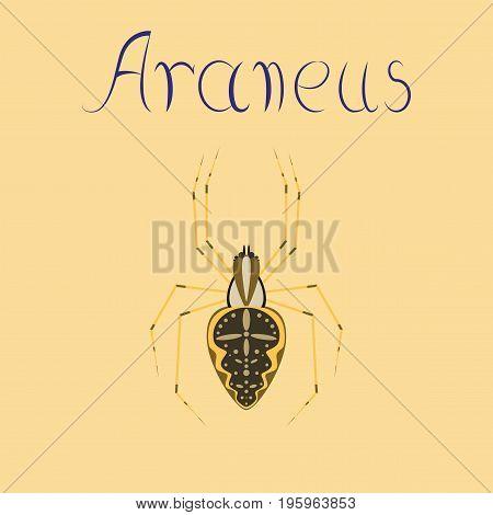 flat illustration on stylish background spider Araneus