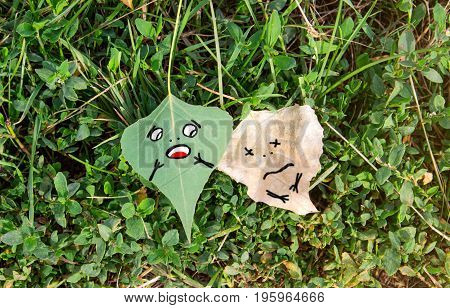 Green and dry leaf meme on grass